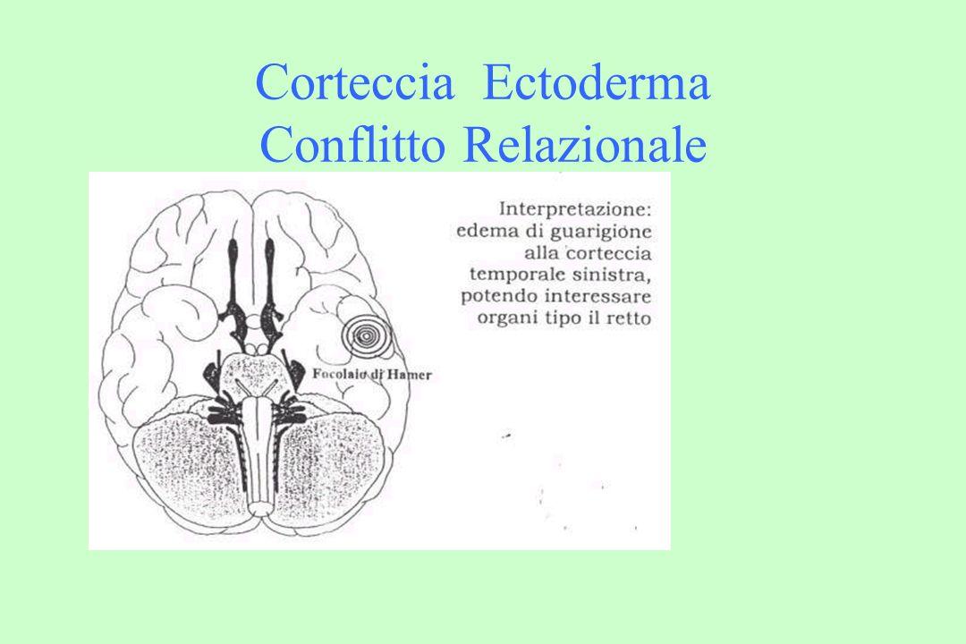 Corteccia Ectoderma Conflitto Relazionale
