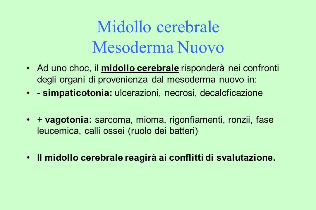 Midollo cerebrale Mesoderma Nuovo