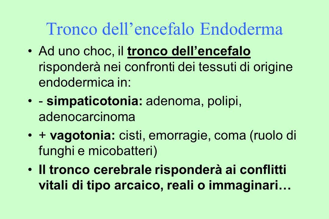 Tronco dell'encefalo Endoderma