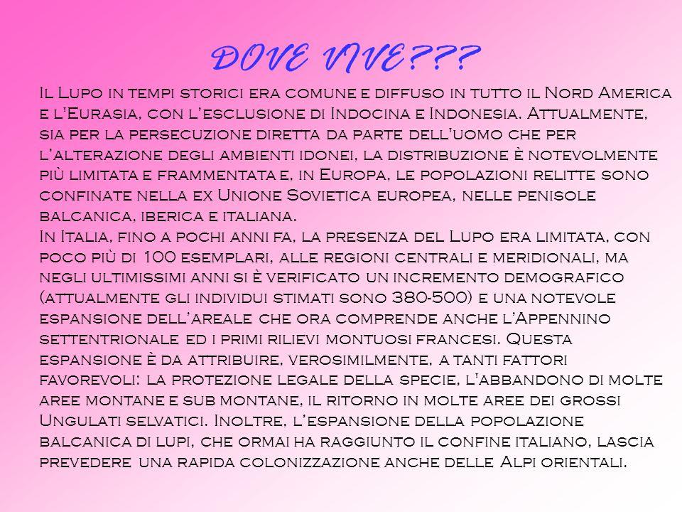 DOVE VIVE
