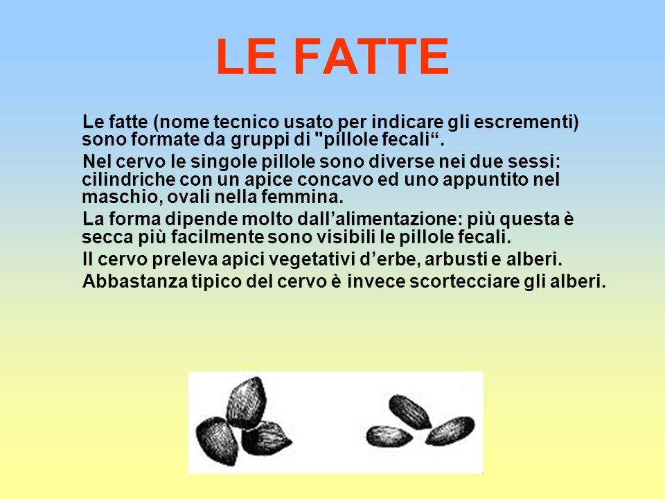 LE FATTE Le fatte (nome tecnico usato per indicare gli escrementi) sono formate da gruppi di pillole fecali .