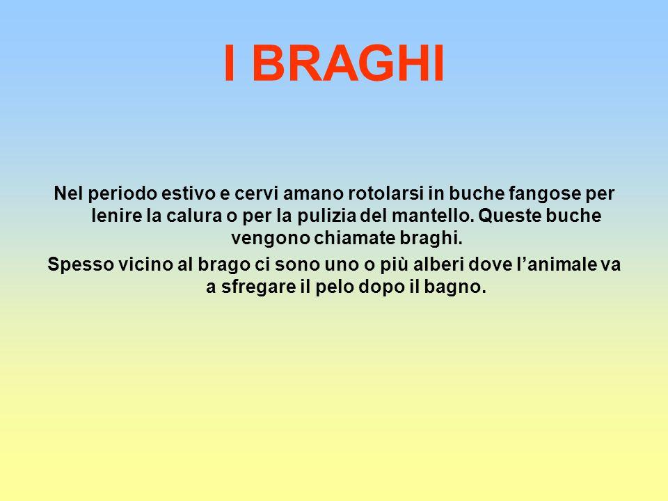 I BRAGHI
