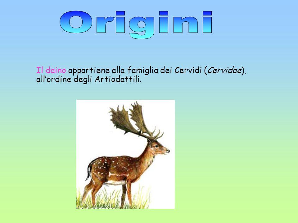 Origini Il daino appartiene alla famiglia dei Cervidi (Cervidae), all'ordine degli Artiodattili.