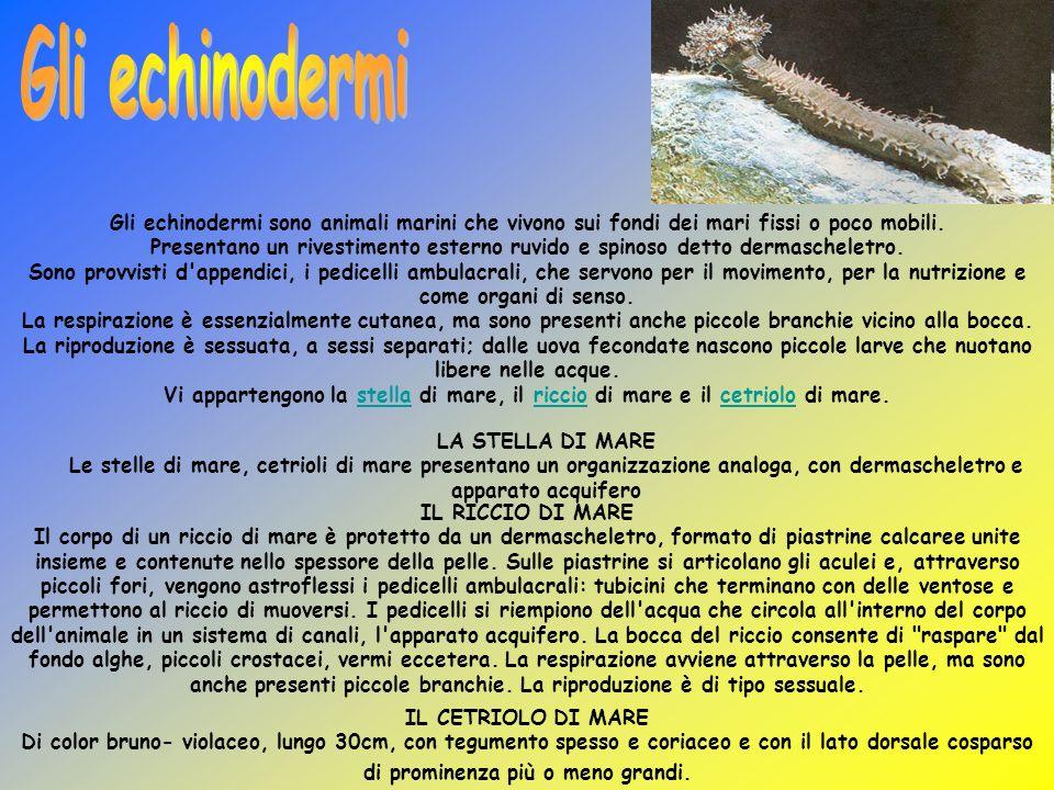 Gli echinodermi Gli echinodermi sono animali marini che vivono sui fondi dei mari fissi o poco mobili.