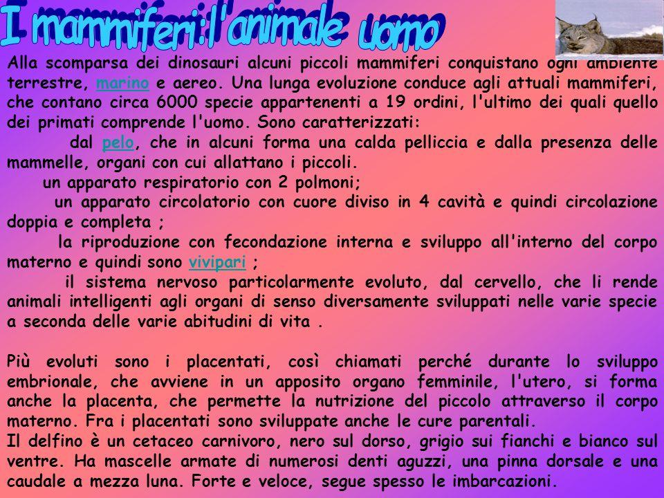 I mammiferi:l animale uomo