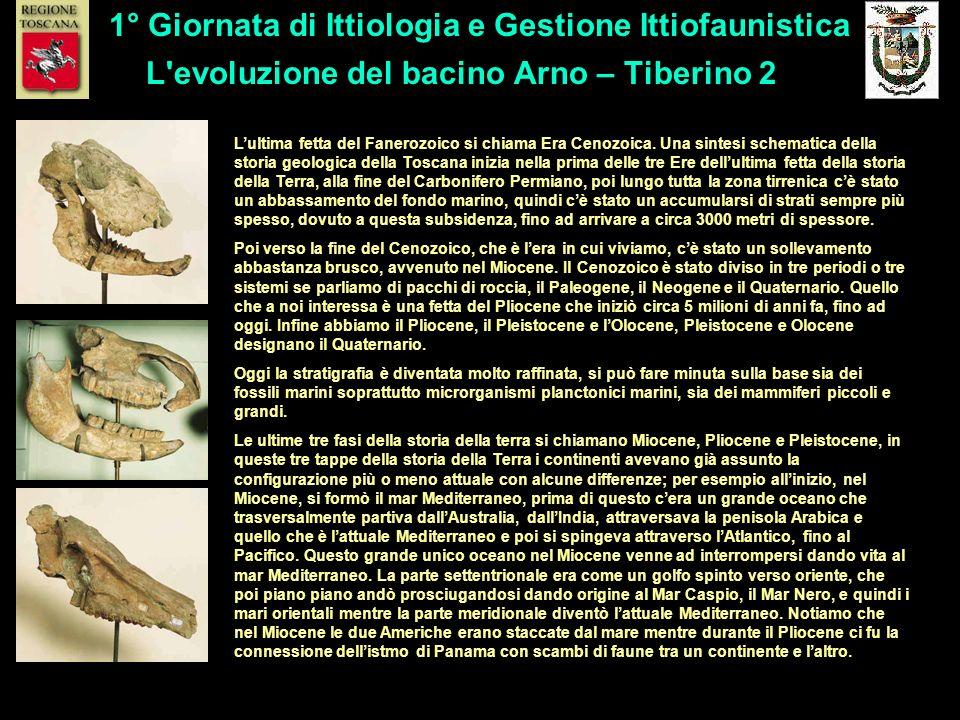 L evoluzione del bacino Arno – Tiberino 2