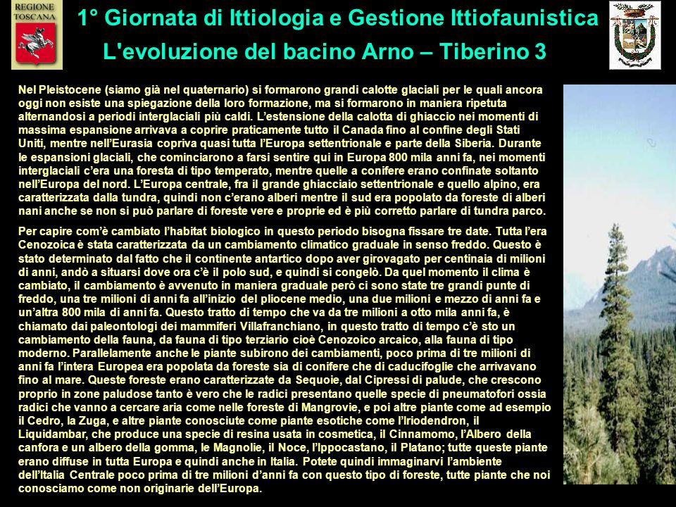 L evoluzione del bacino Arno – Tiberino 3