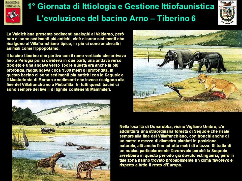 L evoluzione del bacino Arno – Tiberino 6