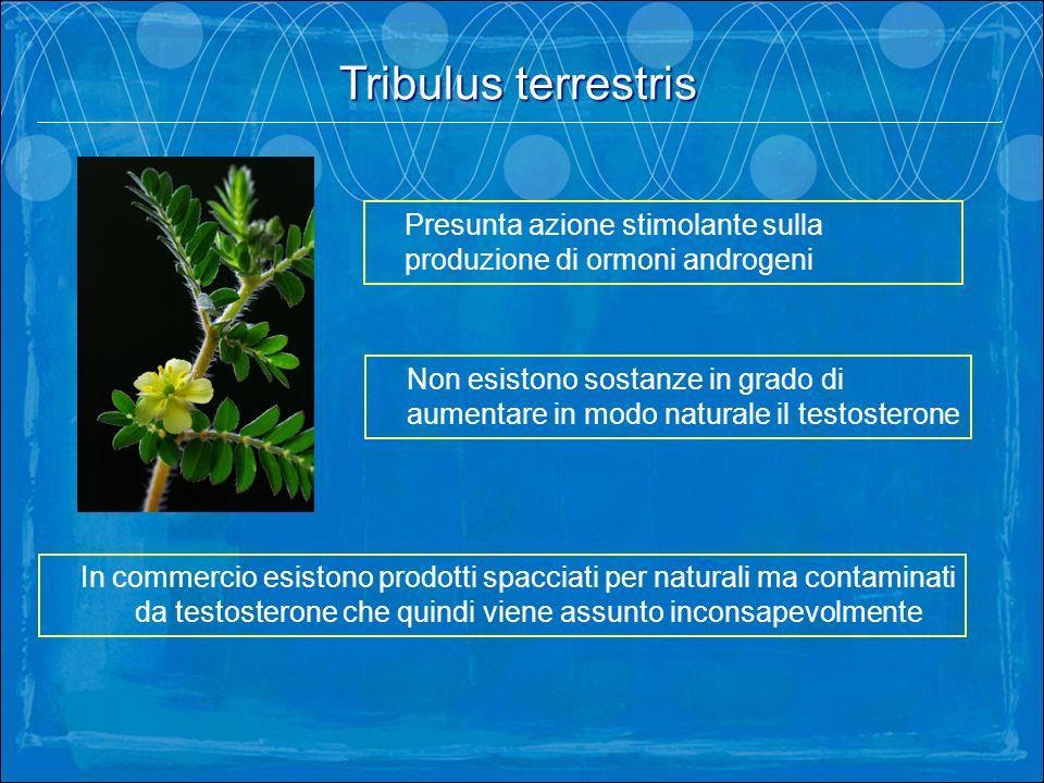 Tribulus terrestris . Presunta azione stimolante sulla produzione di ormoni androgeni.