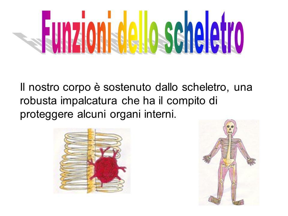 Funzioni dello scheletro