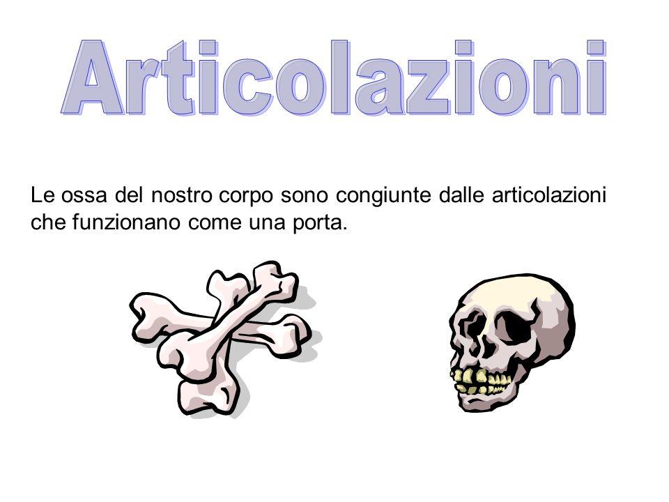 Articolazioni Le ossa del nostro corpo sono congiunte dalle articolazioni che funzionano come una porta.