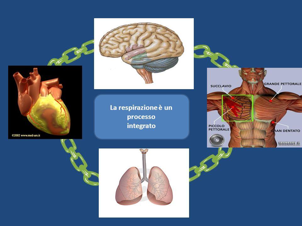 La respirazione è un processo