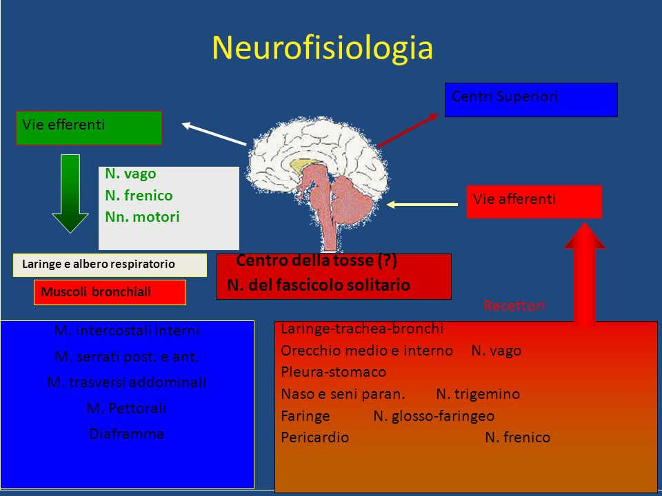Neurofisiologia N. del fascicolo solitario Centri Superiori