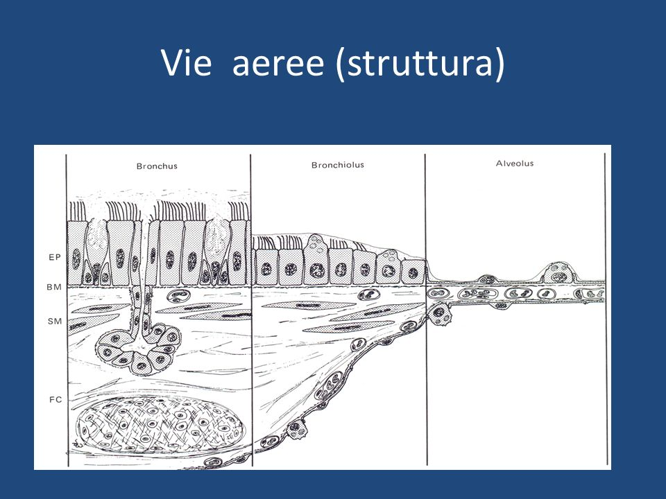 Vie aeree (struttura)