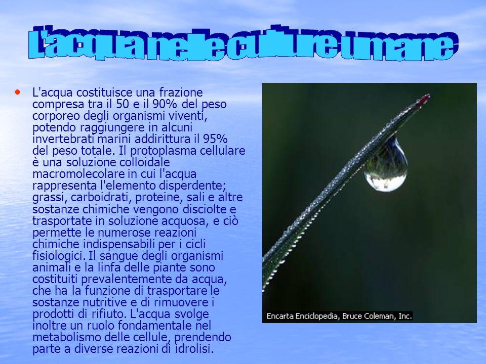 L acqua nelle culture umane