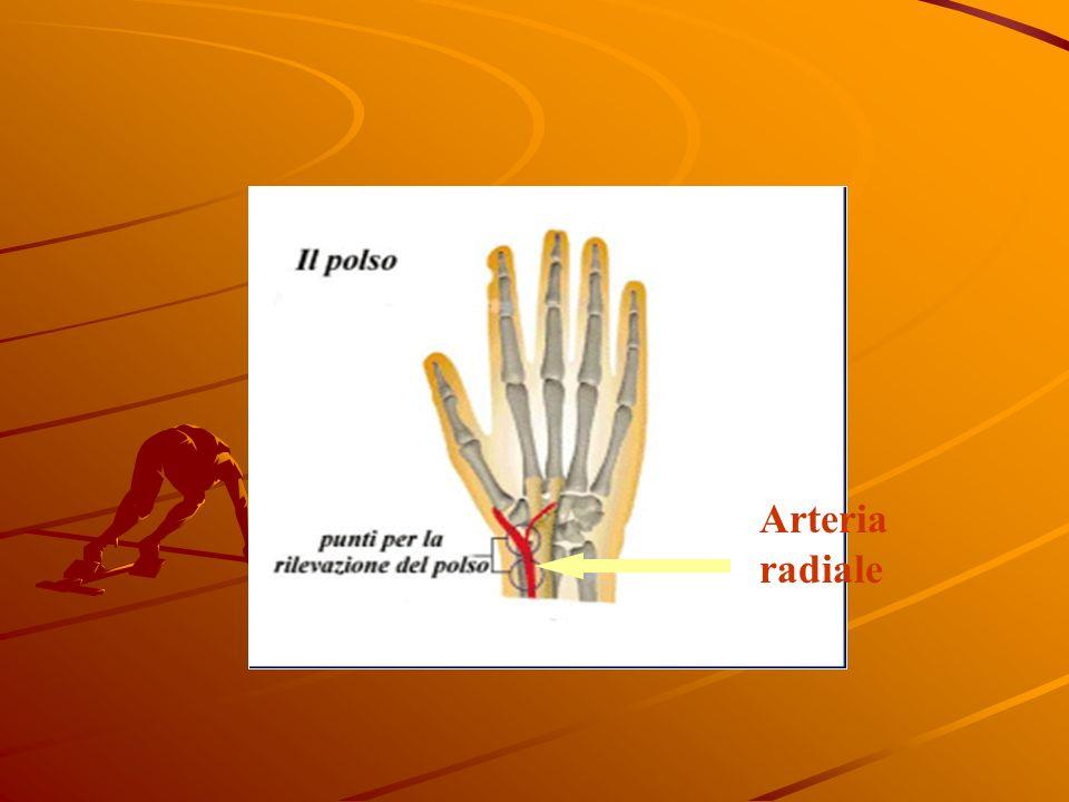 Arteria radiale