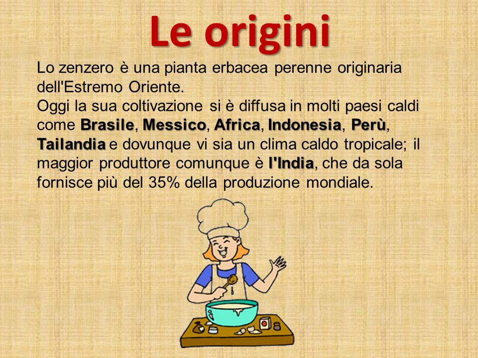 Le origini Lo zenzero è una pianta erbacea perenne originaria dell Estremo Oriente.