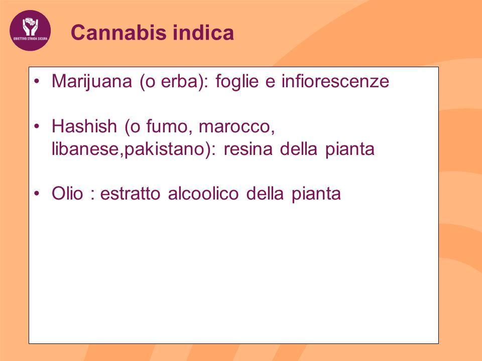Cannabis indica Marijuana (o erba): foglie e infiorescenze