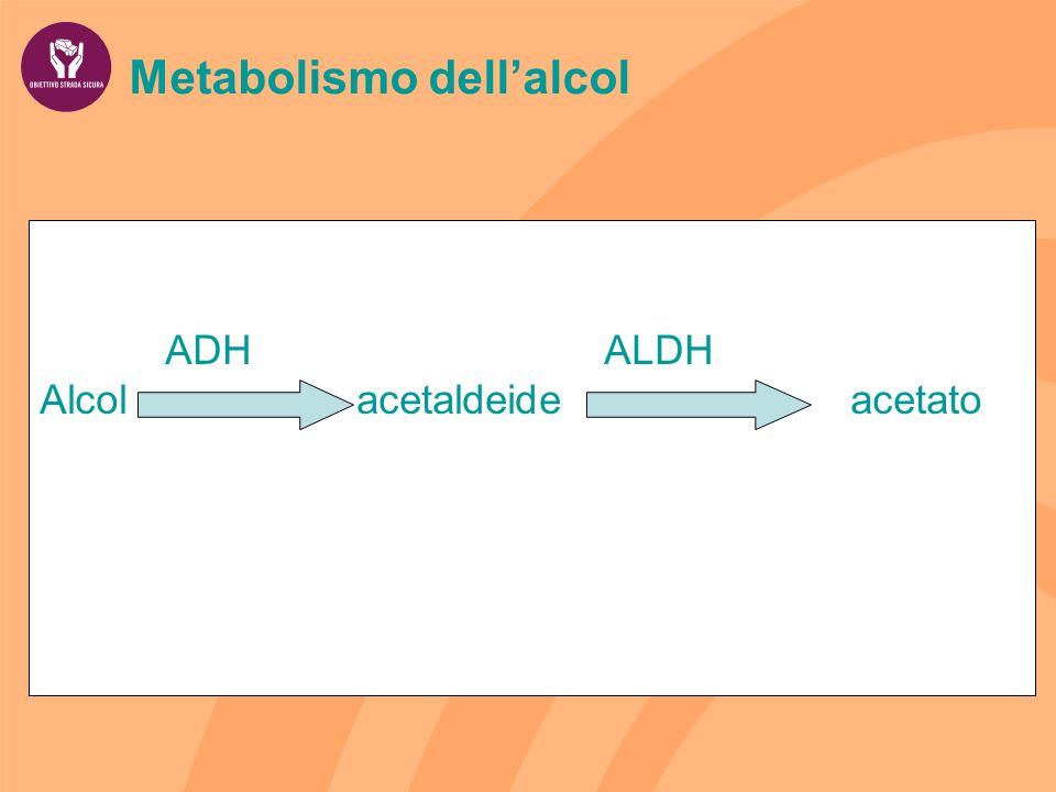 Metabolismo dell'alcol