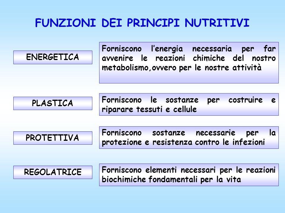 FUNZIONI DEI PRINCIPI NUTRITIVI