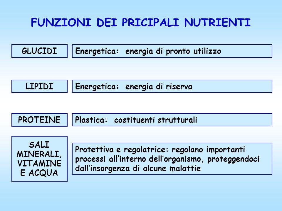 FUNZIONI DEI PRICIPALI NUTRIENTI