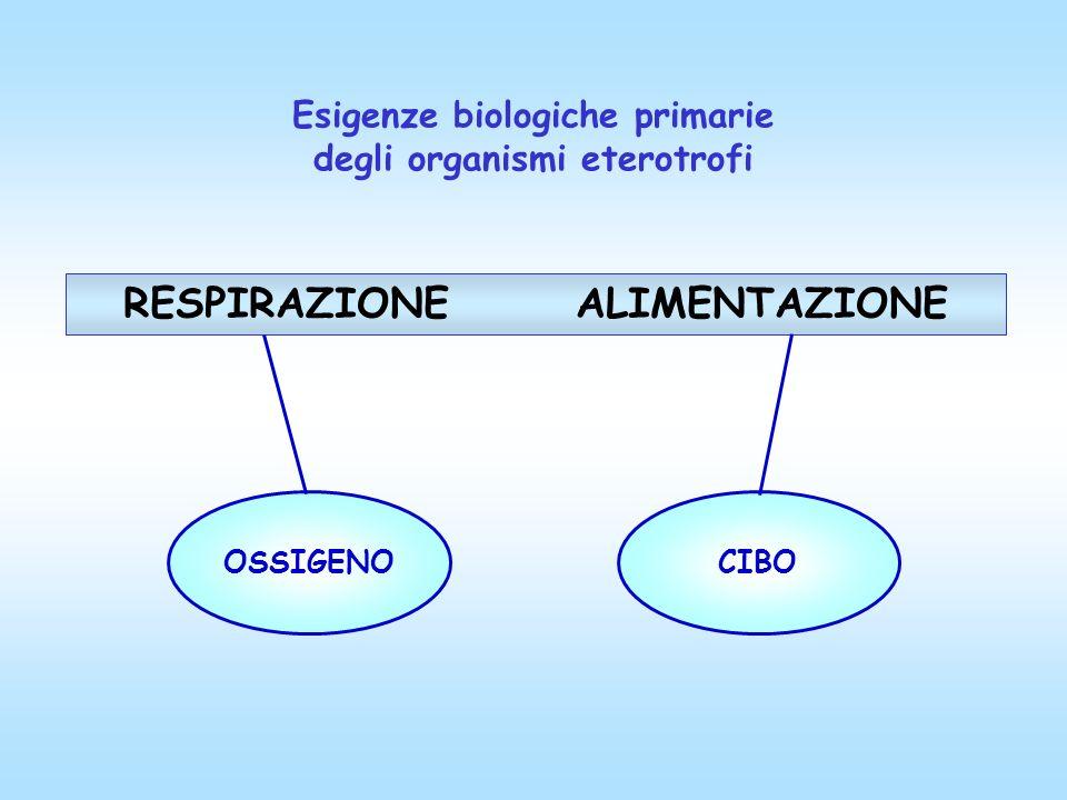 Esigenze biologiche primarie degli organismi eterotrofi