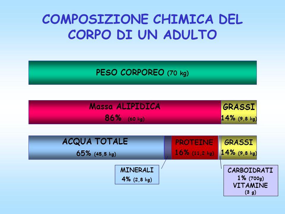 COMPOSIZIONE CHIMICA DEL CORPO DI UN ADULTO