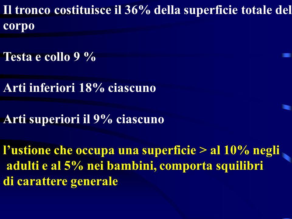 Il tronco costituisce il 36% della superficie totale del