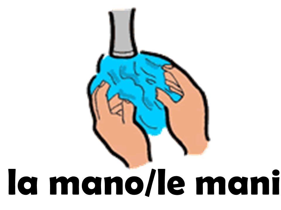la mano/le mani