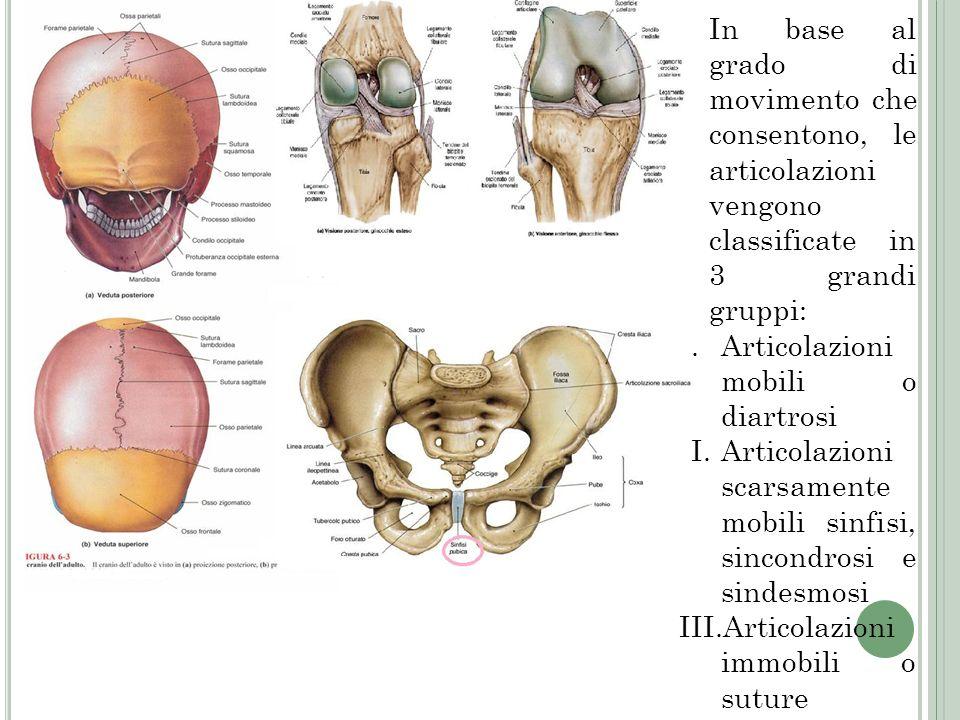 In base al grado di movimento che consentono, le articolazioni vengono classificate in 3 grandi gruppi: