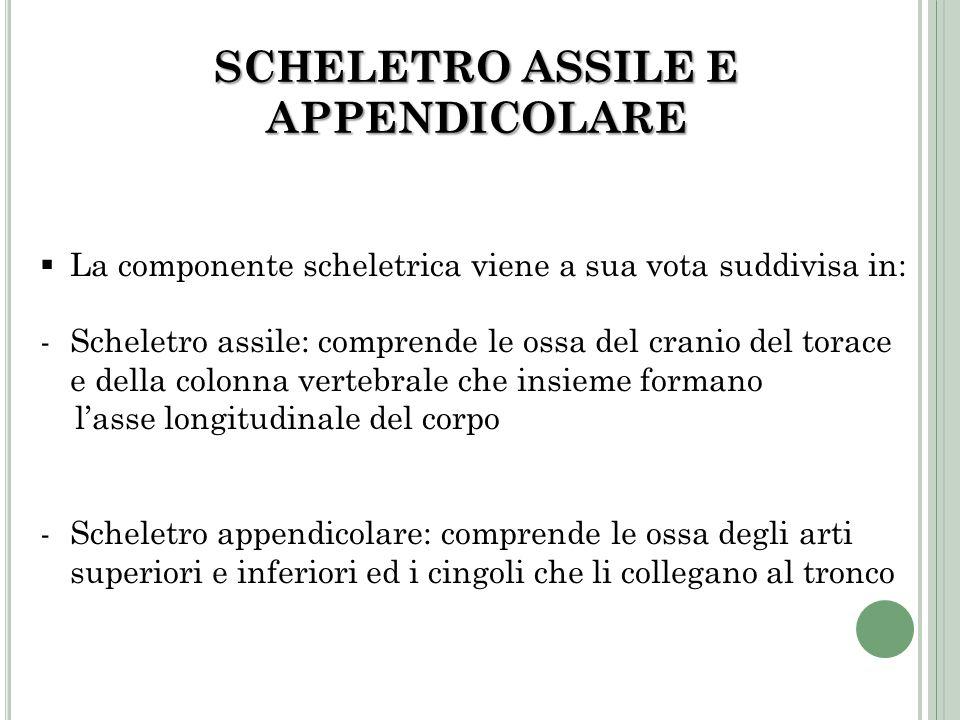 SCHELETRO ASSILE E APPENDICOLARE
