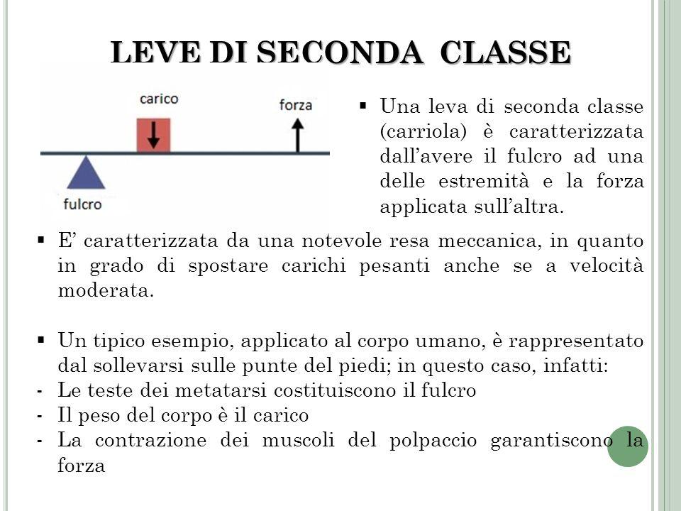 LEVE DI SECONDA CLASSE