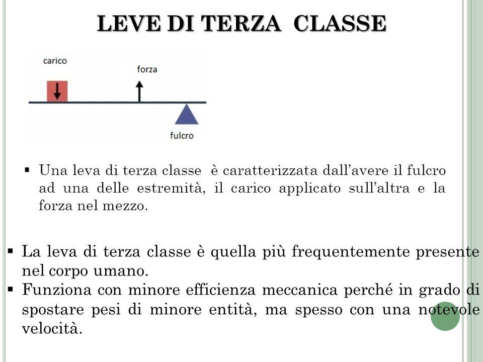 LEVE DI TERZA CLASSE