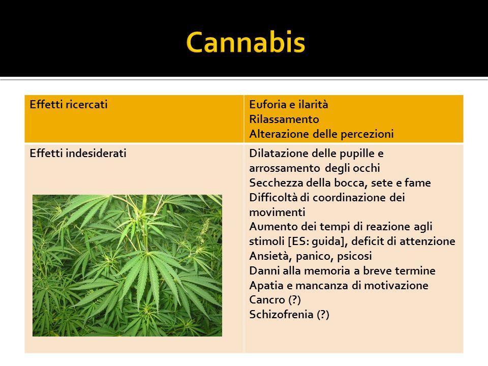 Cannabis Effetti ricercati Euforia e ilarità Rilassamento
