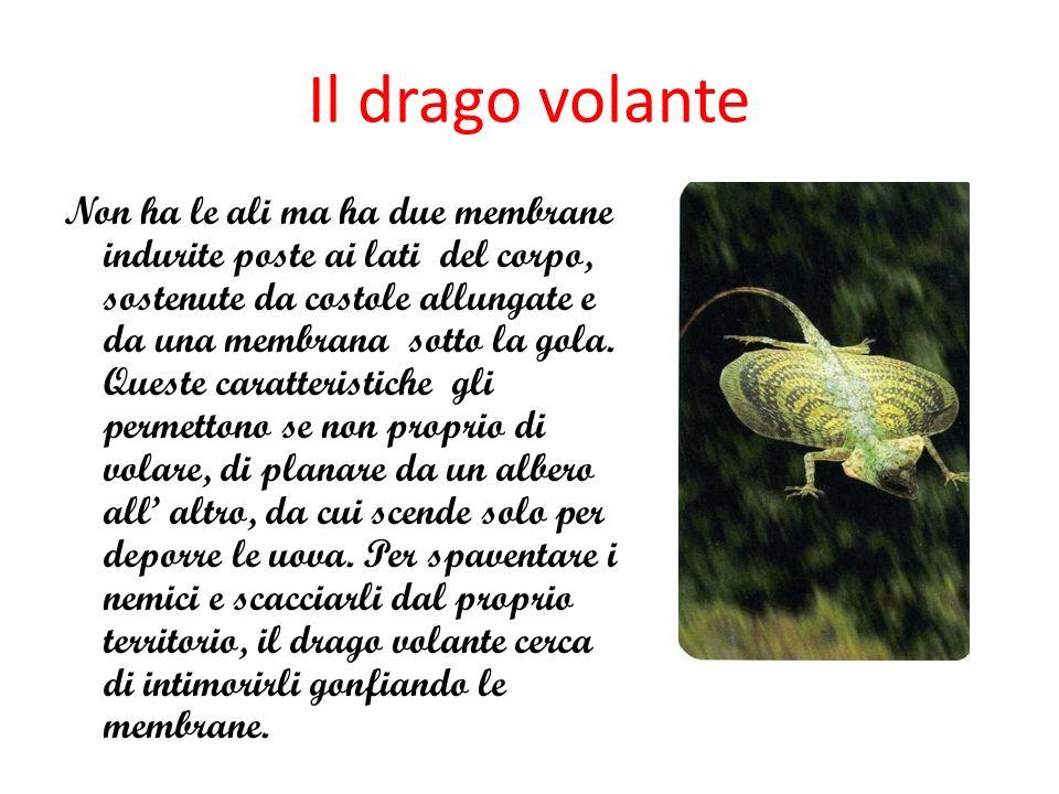 Il drago volante
