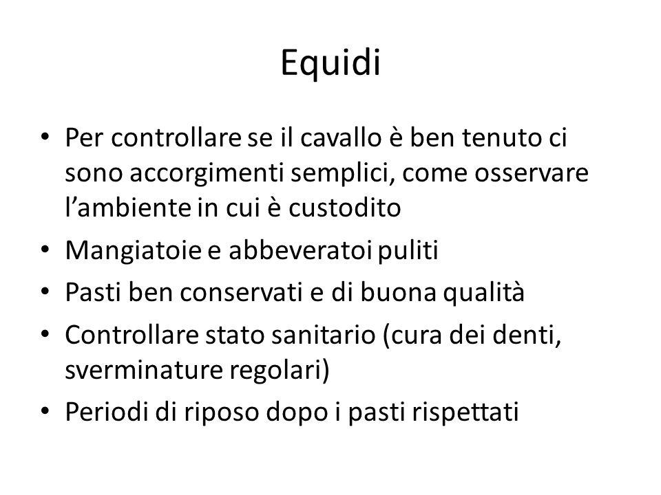 Equidi Per controllare se il cavallo è ben tenuto ci sono accorgimenti semplici, come osservare l'ambiente in cui è custodito.