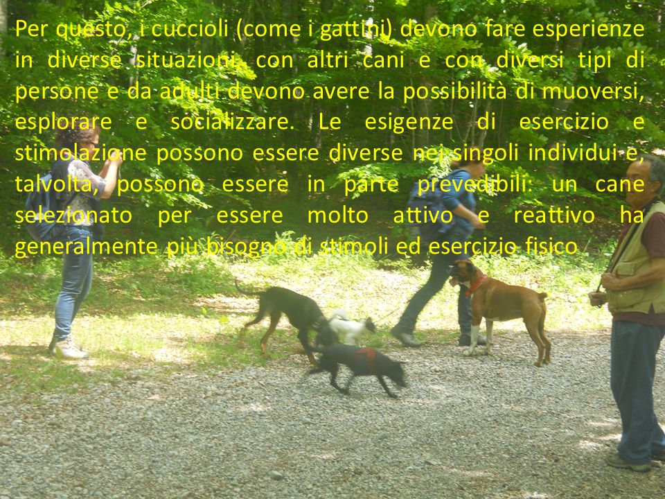 Per questo, i cuccioli (come i gattini) devono fare esperienze in diverse situazioni, con altri cani e con diversi tipi di persone e da adulti devono avere la possibilità di muoversi, esplorare e socializzare.