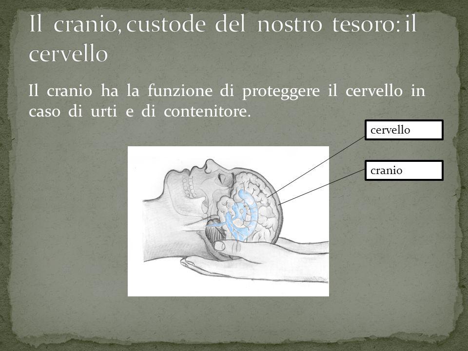 Il cranio, custode del nostro tesoro: il cervello