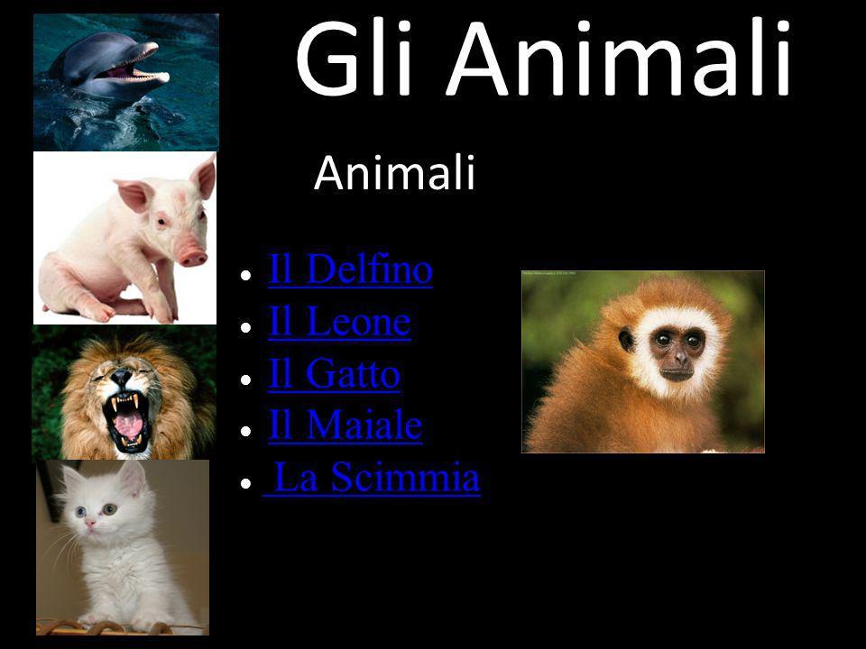 Gli Animali Animali ● Il Delfino ● Il Leone ● Il Gatto ● Il Maiale