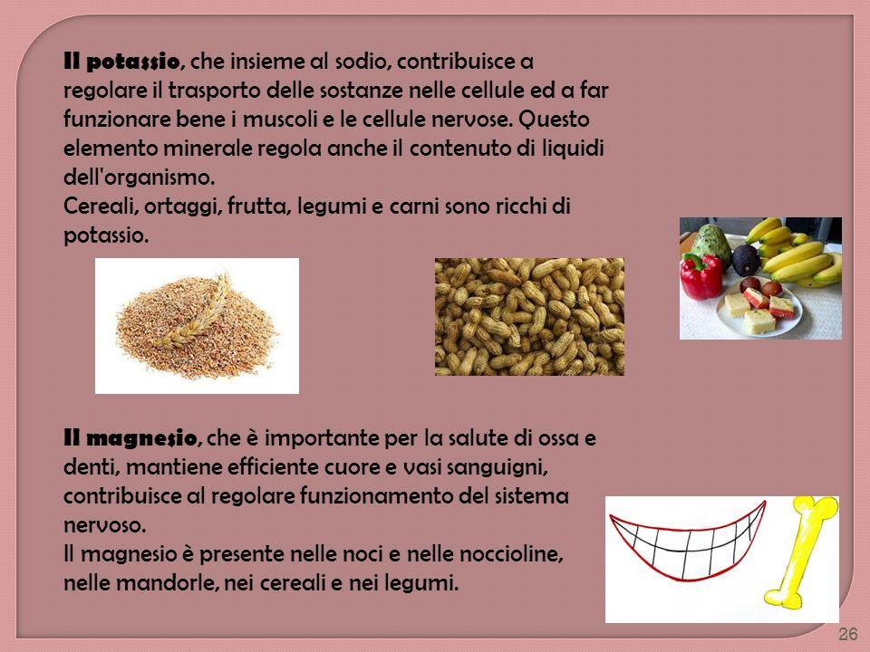 Il potassio, che insieme al sodio, contribuisce a regolare il trasporto delle sostanze nelle cellule ed a far funzionare bene i muscoli e le cellule nervose. Questo elemento minerale regola anche il contenuto di liquidi dell organismo. Cereali, ortaggi, frutta, legumi e carni sono ricchi di potassio.