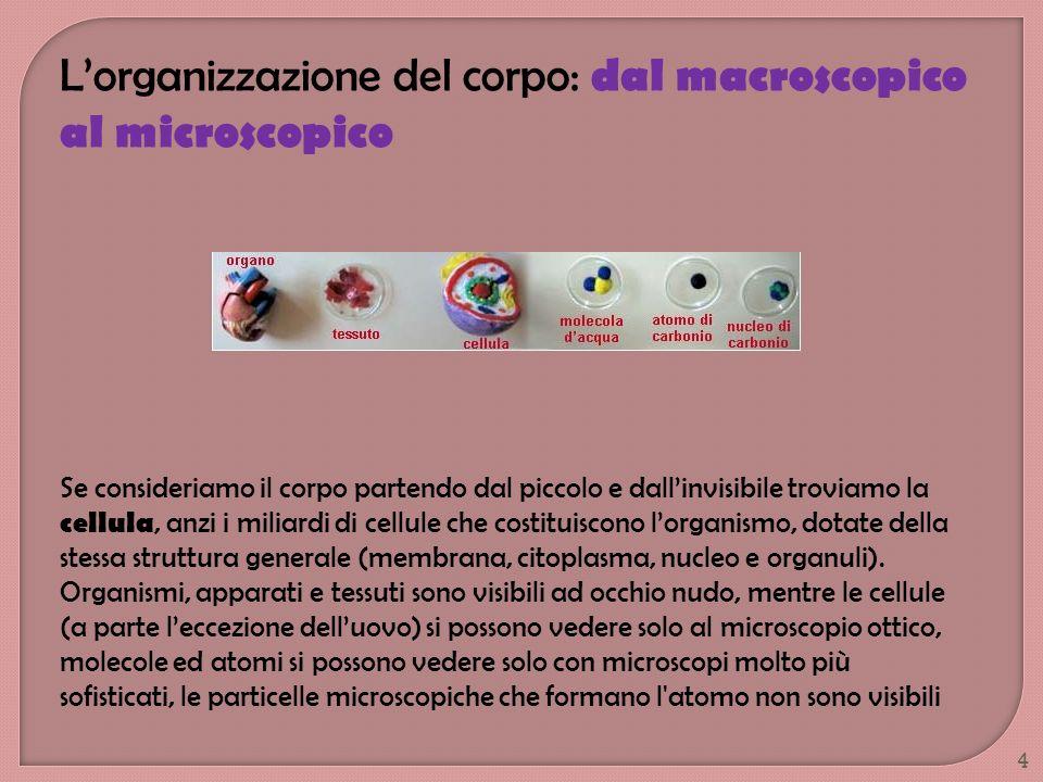 L'organizzazione del corpo: dal macroscopico al microscopico