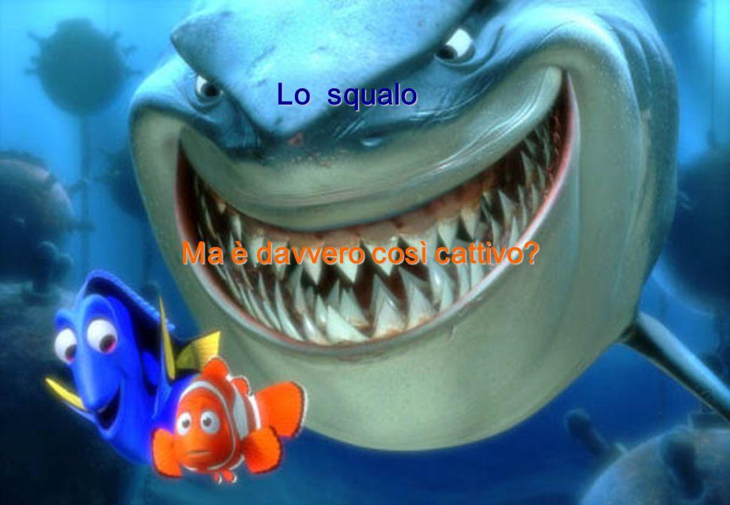 Lo squalo Ma è davvero così cattivo