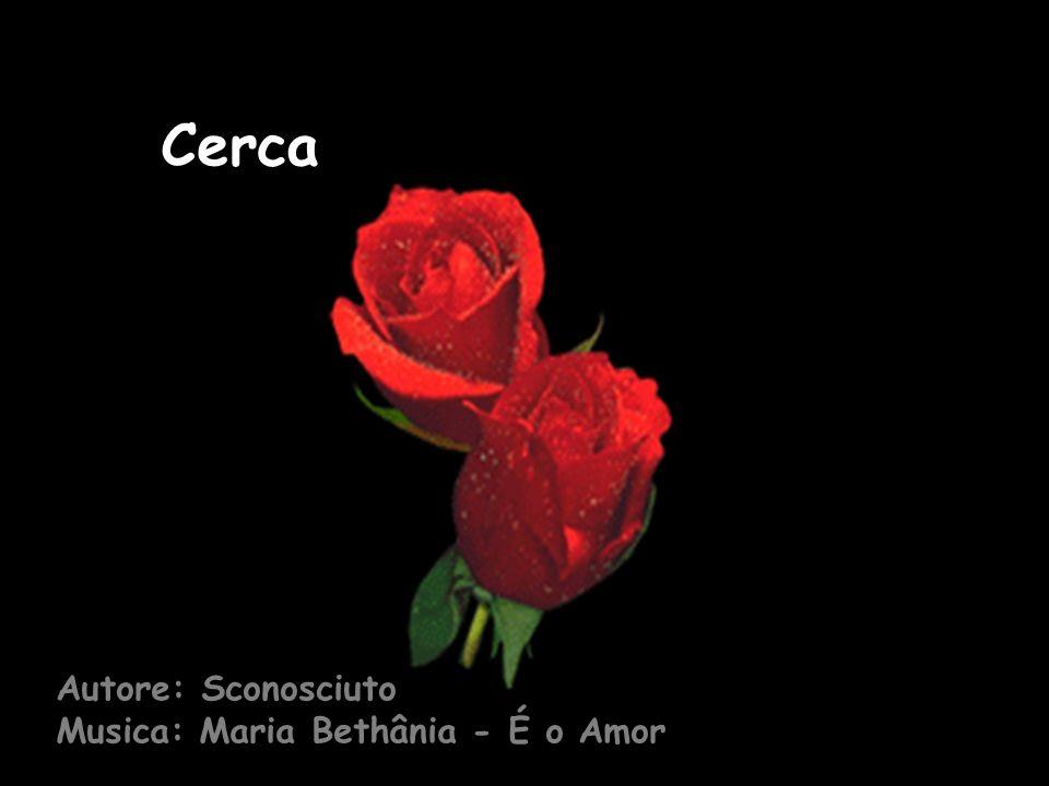 Cerca Autore: Sconosciuto Musica: Maria Bethânia - É o Amor