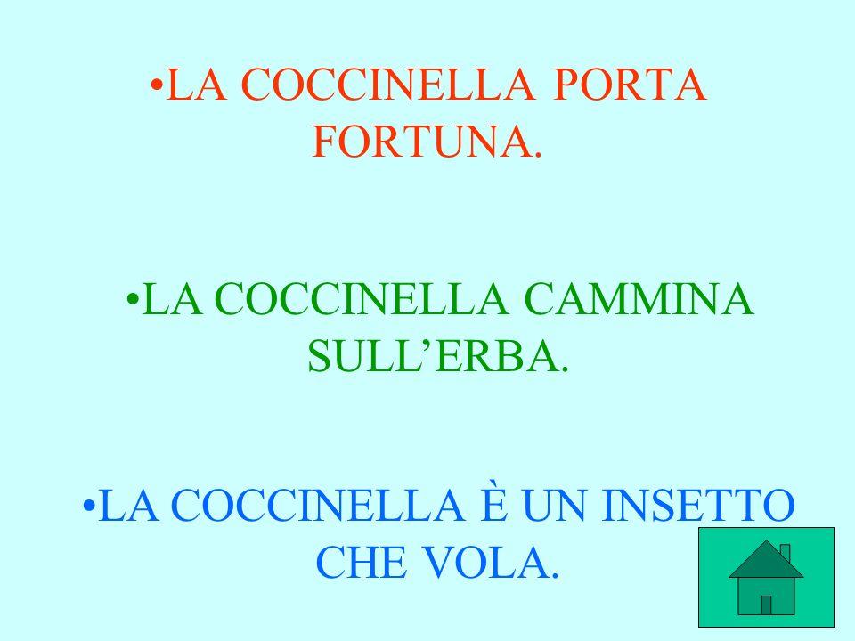LA COCCINELLA PORTA FORTUNA.
