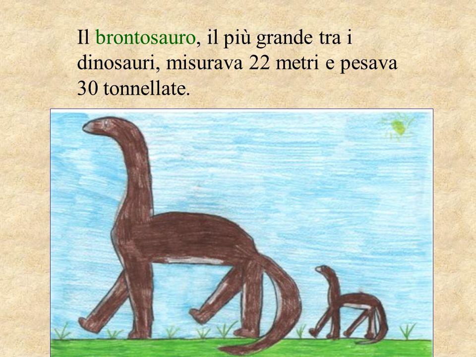 Il brontosauro, il più grande tra i dinosauri, misurava 22 metri e pesava 30 tonnellate.