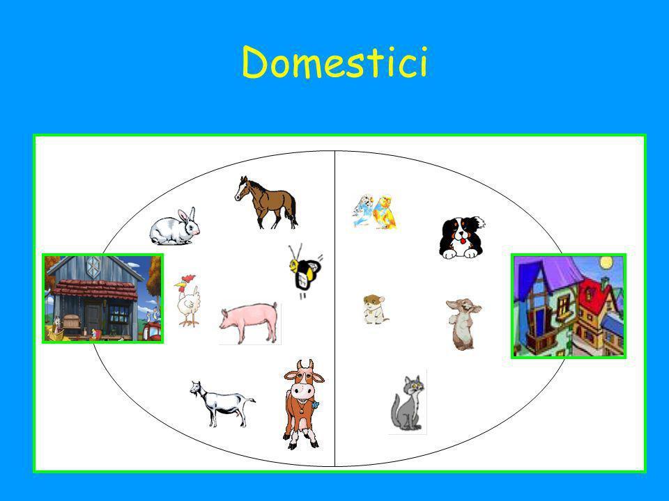 Domestici