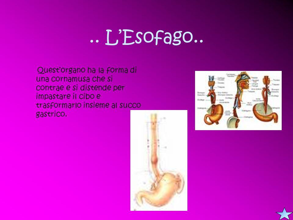 .. L'Esofago..