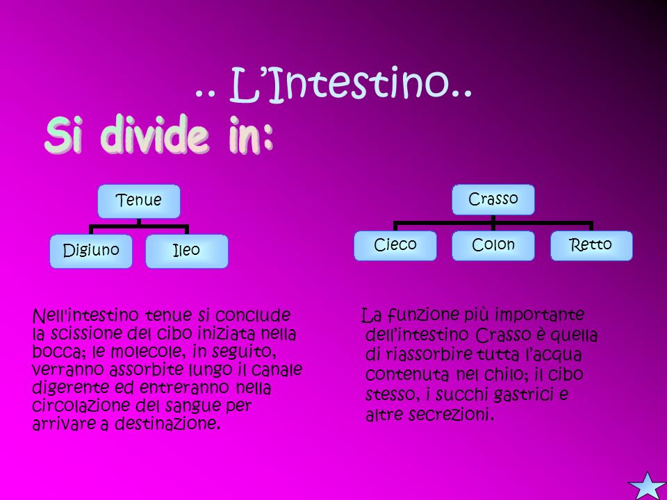 .. L'Intestino.. Si divide in: