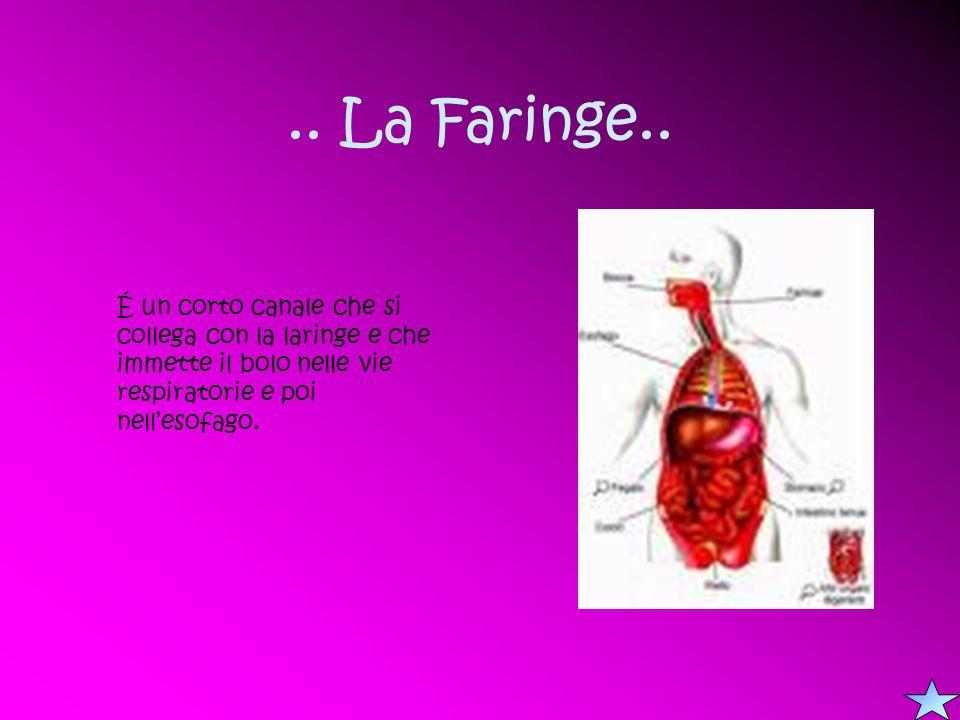 .. La Faringe..