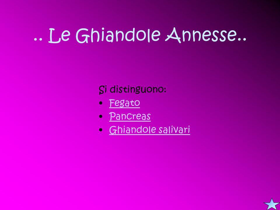 .. Le Ghiandole Annesse.. Si distinguono: Fegato Pancreas